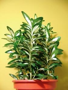 stash cash in plants