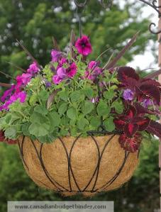 Hanging Basket with Flowers 2012