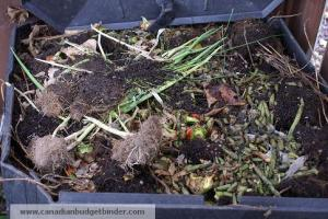 Inside the compost bin