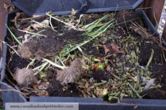 Inside the compost bin