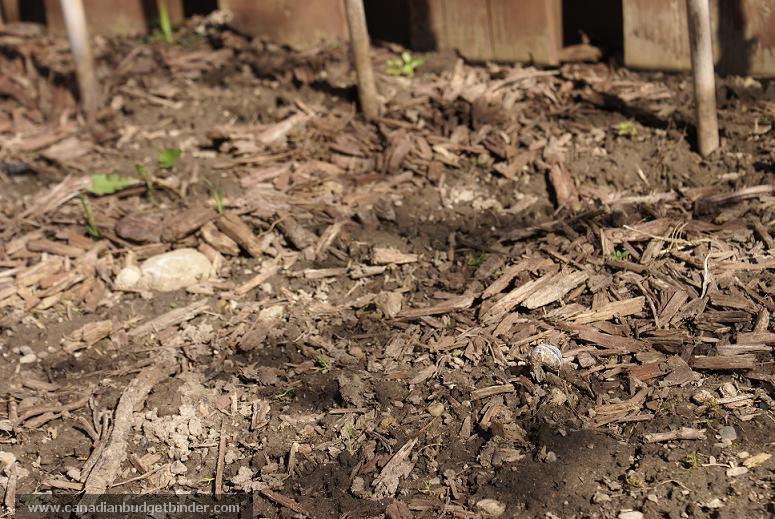 Mulch Vegetable Garden