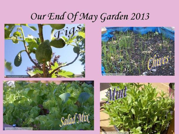 End Of May Garden 2013 part 2