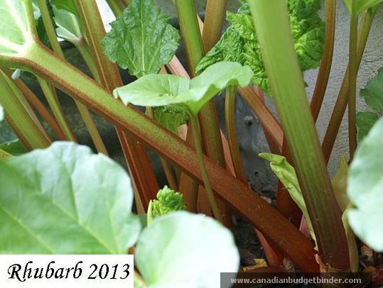 Rhubarb 2013 wm
