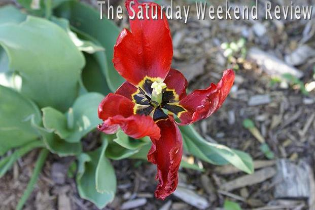 The Saturday Weekend Review 23