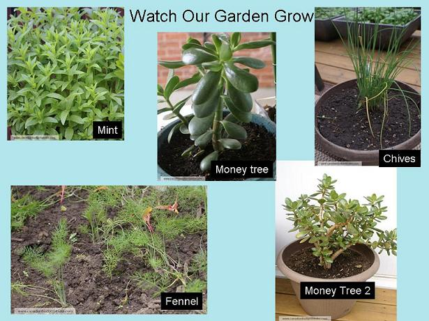 Watch-Our-Garden-Grow