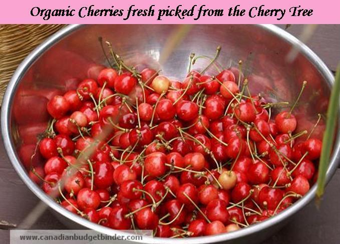 organic-cherries-in-bowl