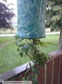 opsy-turvey-tomato-planter