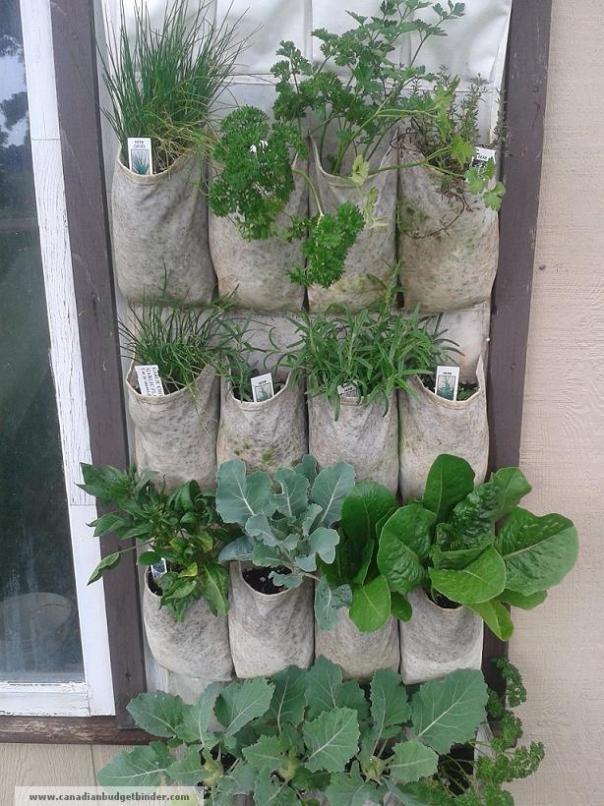 wall-garden-in-full-harvest