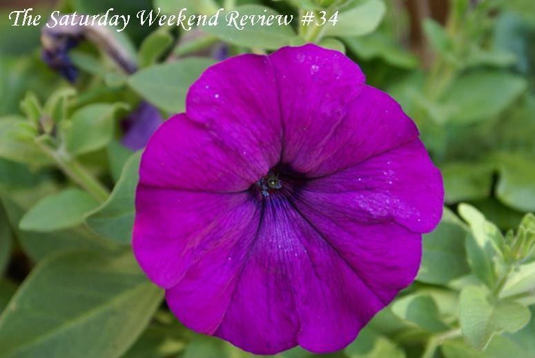 the-saturday-weekend-review-purple-flower-34