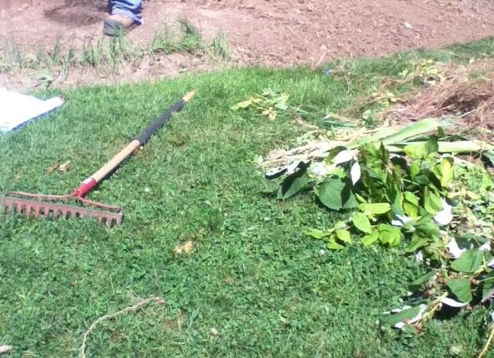 Fall-Yard-work